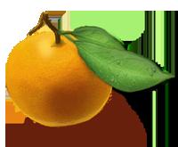 adopta un naranjo